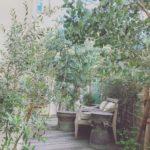 お庭の剪定