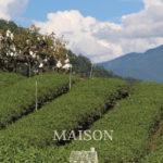 Maison Tea Garden debut!